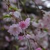 Kyoto Shosei Garden 09.jpg