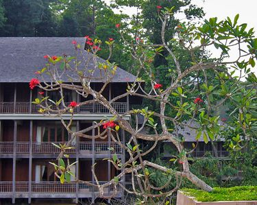 One wing of the Datai.  The resort also has individual villas located in the jungle.