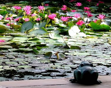 This lily pond is in the reception of the hotel.