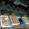 There are about 20 various sizes and species of shrimp offered for sale