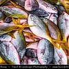Southeast Asia - Malaysia - Borneo - Sabah - Kota Kinabalu - Life on Traditional Market - Locally Caught Fresh Fish