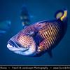 Malaysia - Kedah - Pulau Langkawi - Langkawi Island - Kilim Karst Geoforest Park - Located at the East of Langkawi Island -  Kilim Karst Geoforest Park is located at the East of Langkawi Island - Rich sea life full of various fish in Andaman Sea
