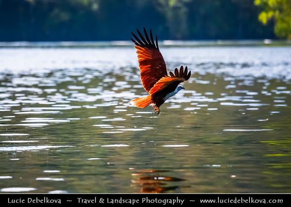 Malaysia - Kedah - Pulau Langkawi - Langkawi Island - Kilim Karst Geoforest Park - Located at the East of Langkawi Island -  Kilim Karst Geoforest Park is located at the East of Langkawi Island - Eagles hunting over Andaman Sea