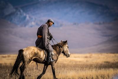 My horse guide, Sunbee
