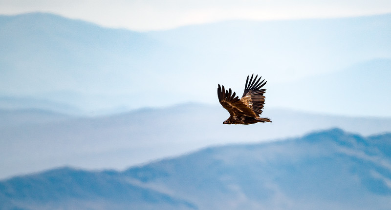 Mongolia - Gobi Desert and Altai Eagle Festival - 2015