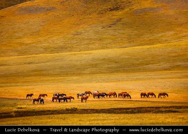 Asia - Mongolia - Монгол улс - Land of Vast Steppes & Kind Nomads - Northern Mongolia - Selenge Province - Stunning landscape bathing in warm autumn colors - Landscape of the North with Mongolian Horses