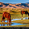 Asia - Mongolia - Монгол улс - Gobi Gurvansaikhan National Park - Говь гурван сайхан байгалийн цогцолбор газар - Gobi three beauties nature complex - Gobi Desert - Endless Sea of Khongor Sand Dunes - Singing Dunes - Largest & most spectacular sand dunes in Mongolia - Up to 800 m high, 20 km wide & about 100 km long - Mongol horse - Адуу