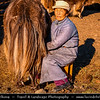 Asia - Mongolia - Монгол улс - Land of Vast Steppes & Kind Nomads - Central Mongolia - Arkhangai province - Khorgo-Terkhiin Tsagaan Nuur National Park - Khangai Mountains - Traditional Life with Yaks - Long-haired bovine found throughout the Himalayan region of south Central Asia, the Tibetan Plateau and as far north as Mongolia and Russia