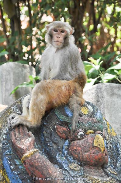 monkeys at Monkey Temple (Kathmandu)
