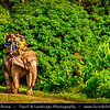 Asia - Nepal - Royal Chitwan National Park - UNESCO World Heritage Site - Oldest national park in Nepal situated in subtropical inner Terai lowlands of South-Central Nepal at foot of Himalayas - Elephant safari