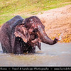 Asia - Nepal - Royal Chitwan National Park - UNESCO World Heritage Site - Oldest national park in Nepal situated in subtropical inner Terai lowlands of South-Central Nepal at foot of Himalayas - Safari - Elephant Bath