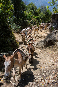 Mules returning down the mountain