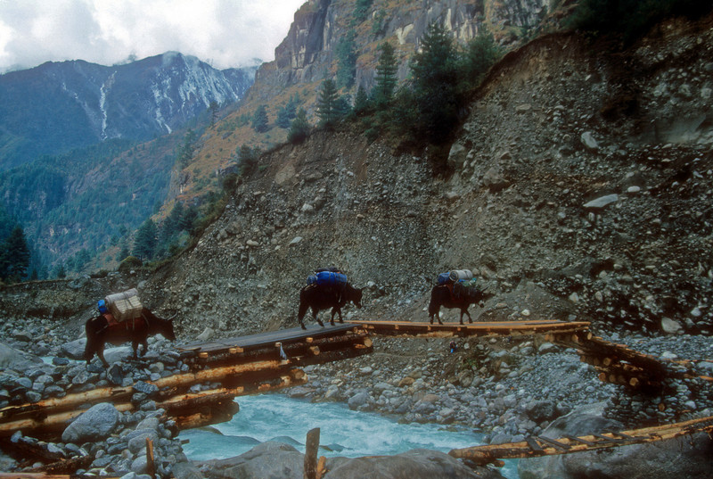 The bridges are critical to transport. They are expensive, get washed out alot, and its better to test them with a Yak when they are new. Kumbu, Nepal