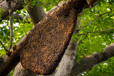 Bee hive. Those are bees on the outside.
