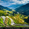 Asia - Philippines - Island country in the western Pacific Ocean - Luzon Island - Ifugao Province - Banaue Rice Terraces - UNESCO World Heritage Site - Described as the eighth wonder of the world - Carved out of the hillside by Ifugao tribes people 2000 to 3000 years ago without the aid of machinery to provide level steps where the natives plant rice, still in use today