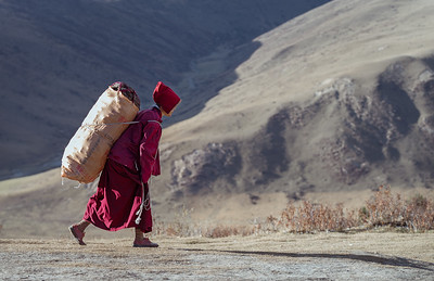 Nun carrying dried yak manure, used for heating.
