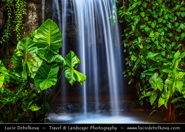 Singapore - Singapore Botanic Gardens - Lush tropical forest in heart of the city - Waterfall