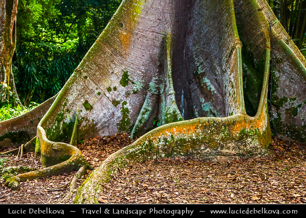 Singapore - Singapore Botanic Gardens - Lush tropical forest in heart of the city