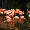 Reflecting on pink, Bird Park, Singapore