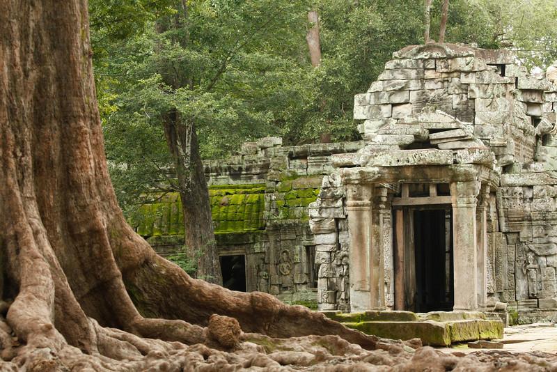 Ta Prohm temple,Siem Reap, Cambodia