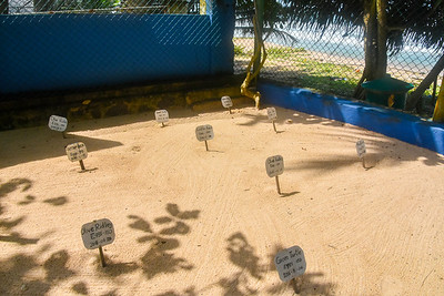 Enclosed turtle egg hatchery
