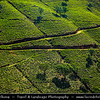 Asia - Sri Lanka - Ceylon - The Pearl of the Indian Ocean - Emerald Isle - Island with tropical forests & diverse landscapes with high biodiversity - Kandy District - Nuwara Eliya Area - Greeness of large tea plantations and estates in central highlands