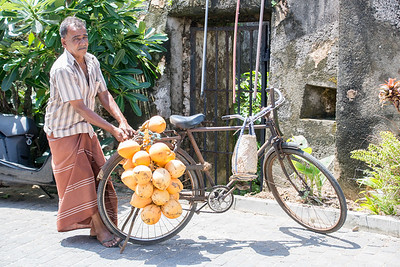 Coconut transport