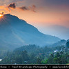 Asia - Sri Lanka - Ceylon - The Pearl of the Indian Ocean - Emerald Isle - Island with tropical forests & diverse landscapes with high biodiversity - Kandy District - Nuwara Eliya Area - Greeness of large tea plantations and estates in central highlands - Sunset