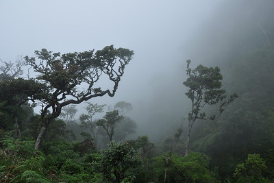 Horton Plains - The Damp Cloud Forest