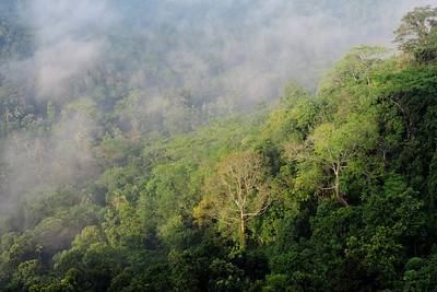 Kadugannawa - Steaming Jungle