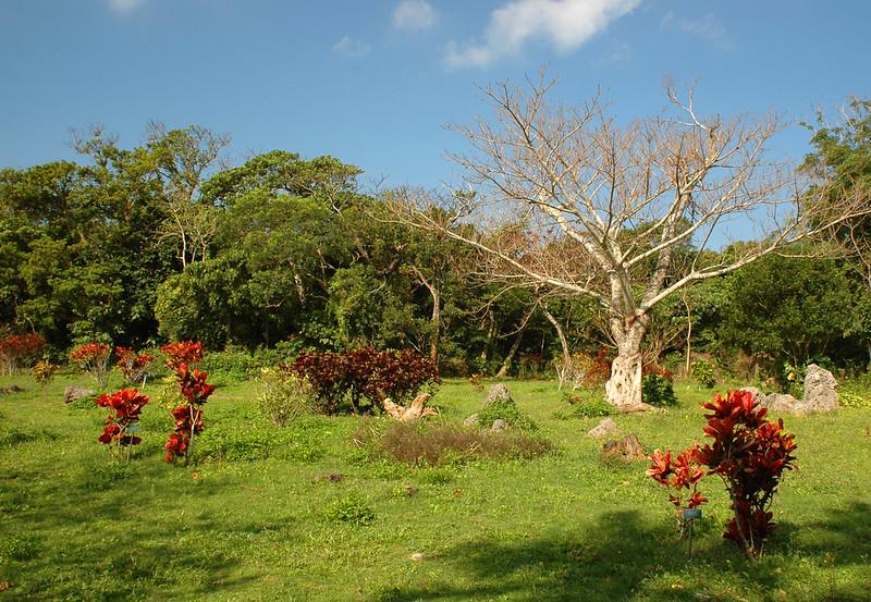 Rare plants garden in  in Kenting national park