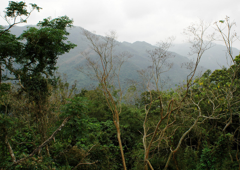 A view in  Zi-Ban National Forest