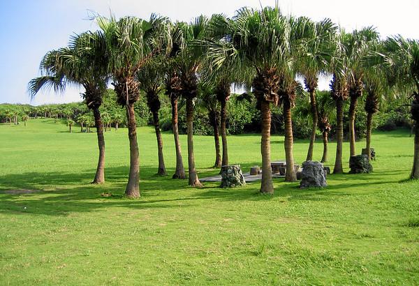 Palm trees inside Kending National Park