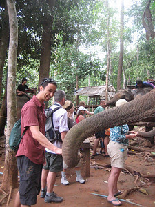 Feeding bananas to our elephant
