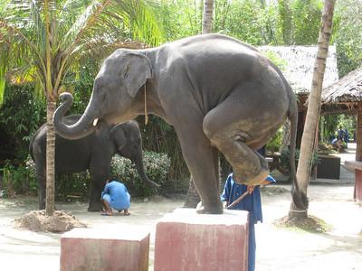 elephant_show_21