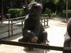 elephant_show_08
