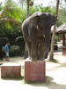 elephant_show_18