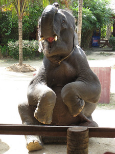 elephant_show_12