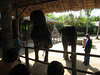 elephant_show_13