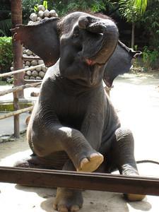 elephant_show_10