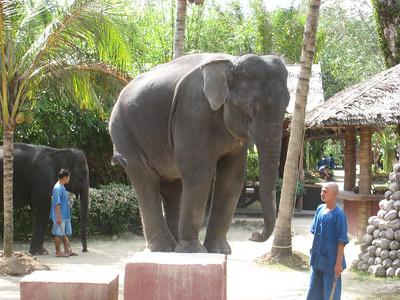 elephant_show_16