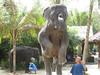 elephant_show_19