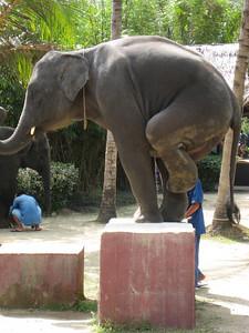 elephant_show_22