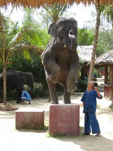 elephant_show_20