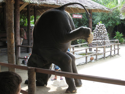 elephant_show_15