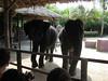 elephant_show_05