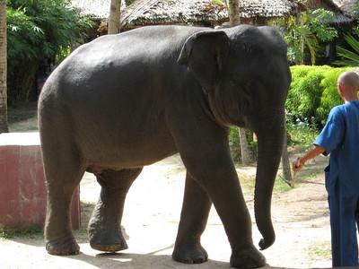 elephant_show_01