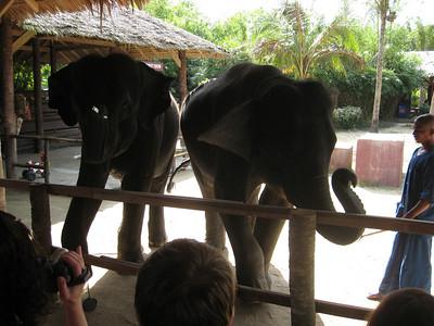 elephant_show_07