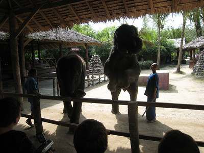 elephant_show_14