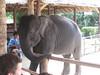 elephant_show_04